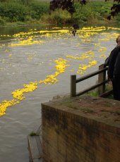 The duck race is underway