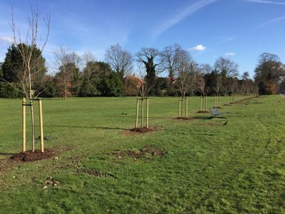 New Cherry Trees on the Tilt