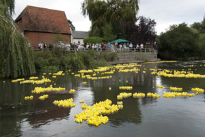 The duck race at Cobham, Surrey